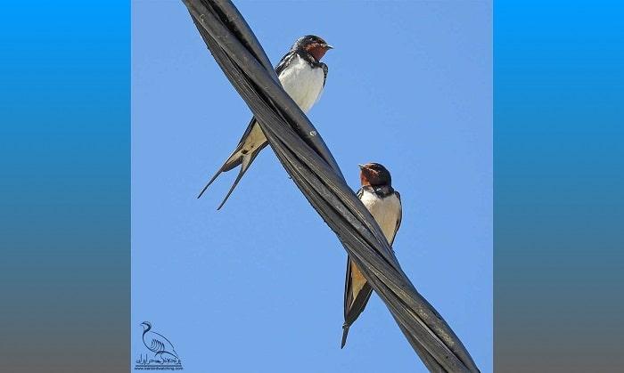 کابل خودنگهدار دوستدار پرندگان