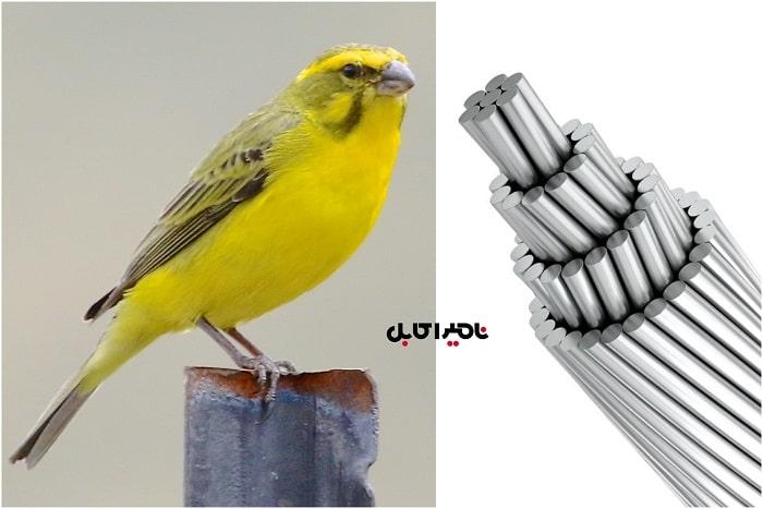 هادی Canary